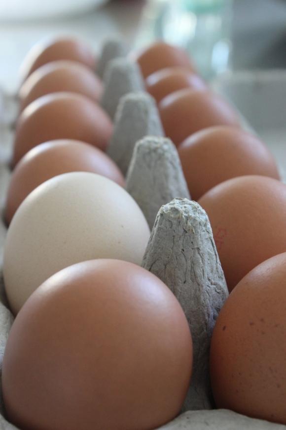 Dello Mano Free Range Eggs